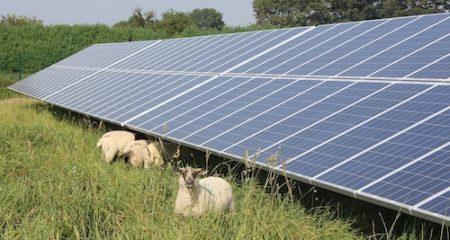 Crinacott Solar Farm, Devon